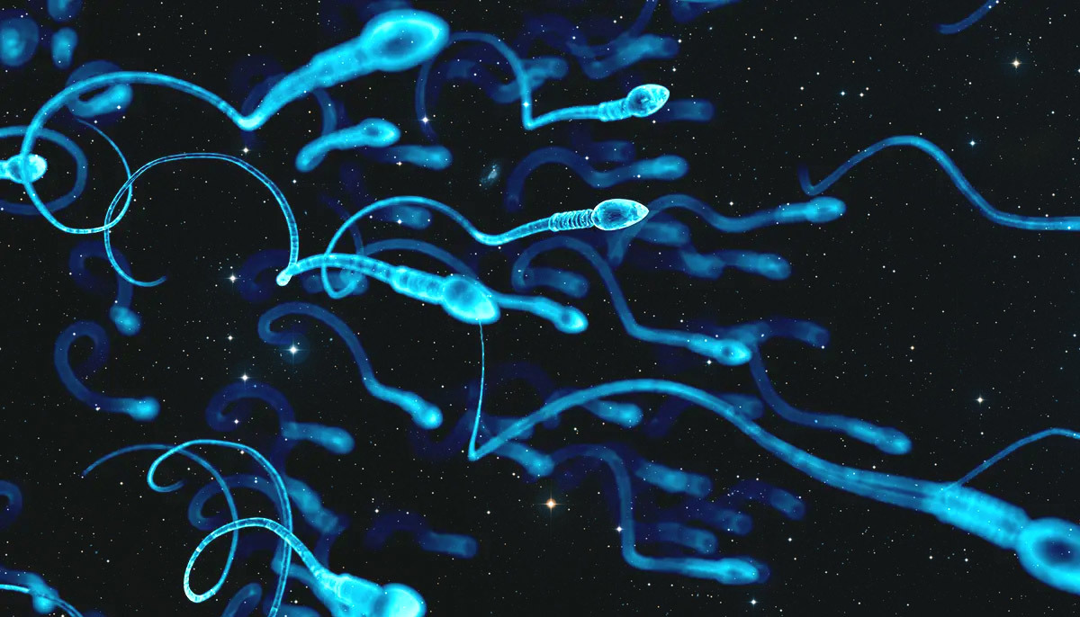 o Fertility and Beyond: Storing Sperm in Space May Be Possible